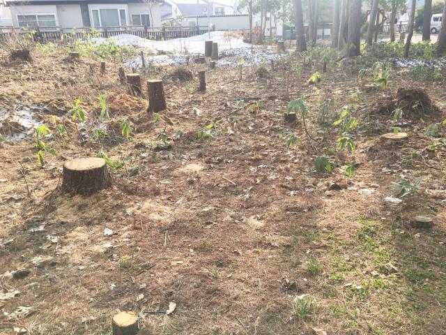 見本林 樹木 伐採後