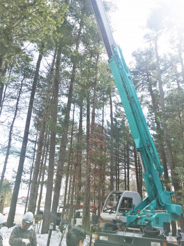 見本林 樹木伐採