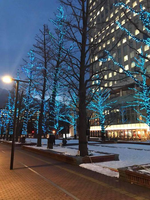 街路樹を彩るイルミネーション
